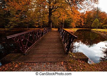 秋天, 顏色, 森林