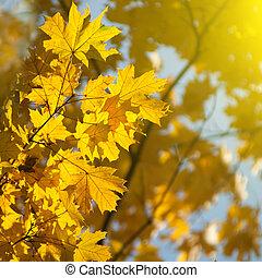 秋天, 黃色 葉子