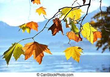 秋天, leaves.