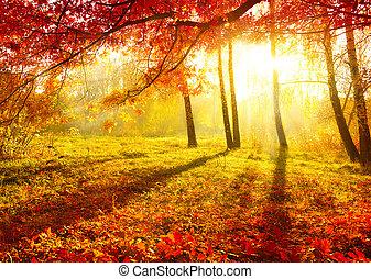 秋天, park., 秋季树, 同时,, leaves., 落下