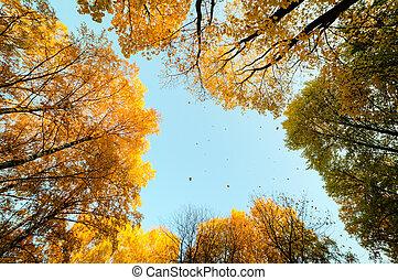 秋季叶片, 落下