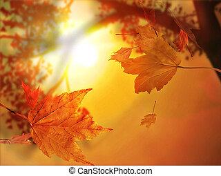 秋季叶片, 落下, 秋季叶片, 落下