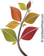 秋季树叶, 分支