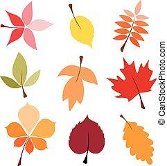 秋季树叶, 放置
