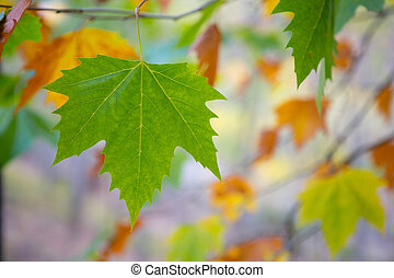 秋季树叶, 树, 背景, 落下