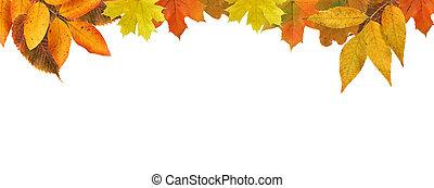 秋季树叶, 边界