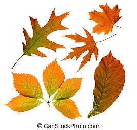 秋季树叶, 隔离