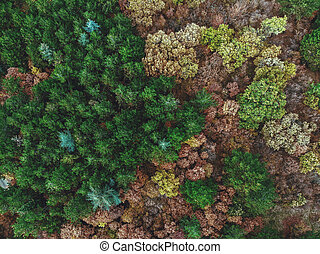 秋季森林, 在上面