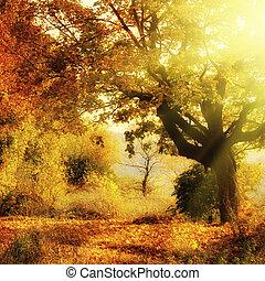 秋季森林, 由于, 太陽 射線