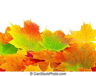 秋季槭樹葉, 背景