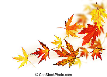 秋季离去, 在上方, 白色