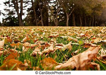 秋季离去, 在地上