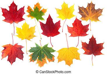秋季离去, 在懷特上