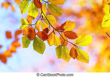 秋季离去, 在, 森林, 人物面部影像逼真