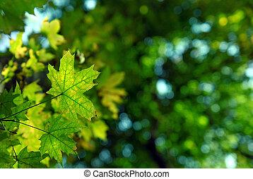 秋季离去, 綠色