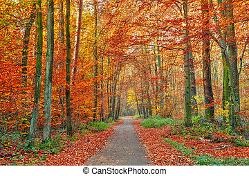 秋季, 公园, 色彩丰富