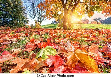 秋季, 公园, 风景, 落下