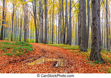 秋季, 山毛榉, 森林, 落下