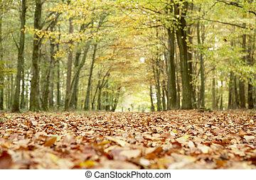 秋季, 树林, 角度, 低, 察看