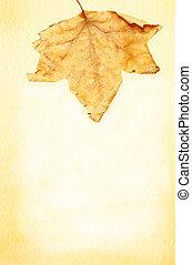 秋季, 框架, 叶子, 羊皮纸