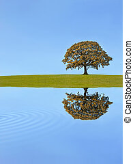秋季, 橡木树