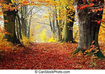 秋季, 落下, forest., 路径, 在中, 红的树叶, 向着, light.