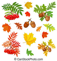 秋季, 设计, 你, 收集
