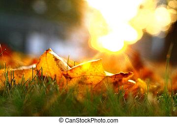 秋季, 金色