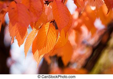 秋季, 颜色