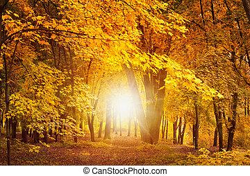 秋日, 中に, 森林