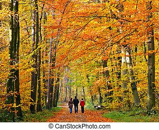 秋, によって, 歩くこと, 公園, 家族
