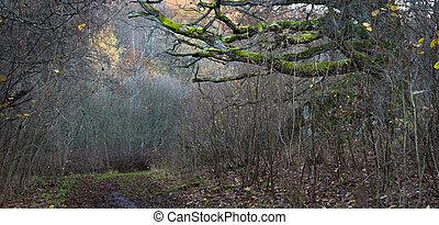 秋, オーク・ツリー, 森林