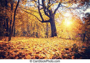 秋, オーク, 日当たりが良い, 森林, 木