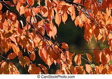 秋, カラフルである