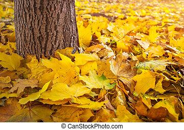 秋, カラフルである, 葉, 地面, そして, 木の幹