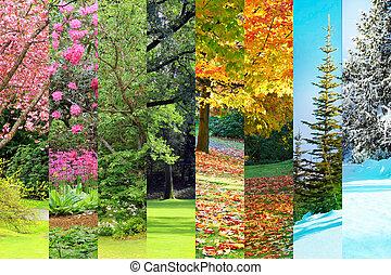 秋, コラージュ, 春, 夏, 冬