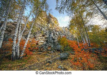 秋, ツリーの森林, シラカバ