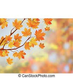 秋, バックグラウンド。, 葉, カラフルである