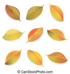 秋, バックグラウンド。, 葉, 白, 隔離された