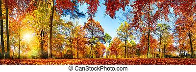 秋, パノラマ, 森林, カラフルである