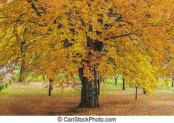 秋, パークに