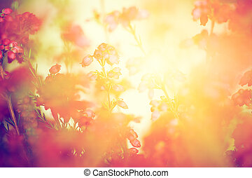秋, ヒース, 牧草地, 太陽, 秋, settng, 花, 照ること