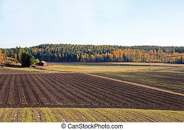 秋, フィールド, 風景, 耕される