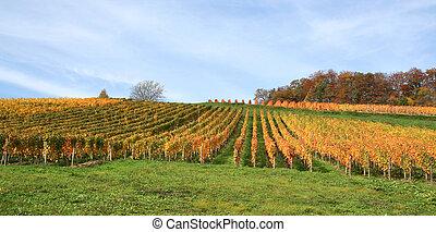 秋, ブドウ園, 景色