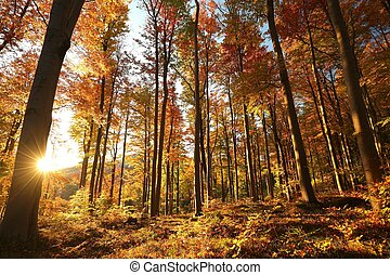 秋, ブナ, 森林