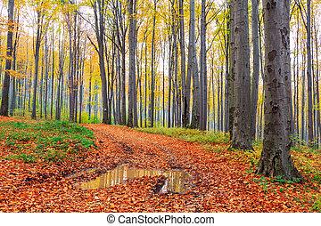 秋, ブナ, 森林, 秋