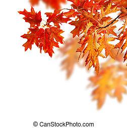 秋, ボーダー, 葉, デザイン