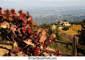 秋, ワイン醸造工場