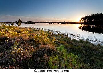 秋, 上に, 日没, 湖