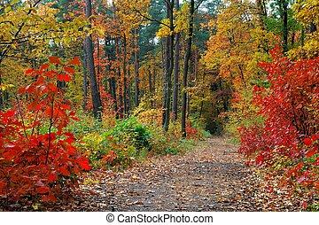 秋, 中に, 森林
